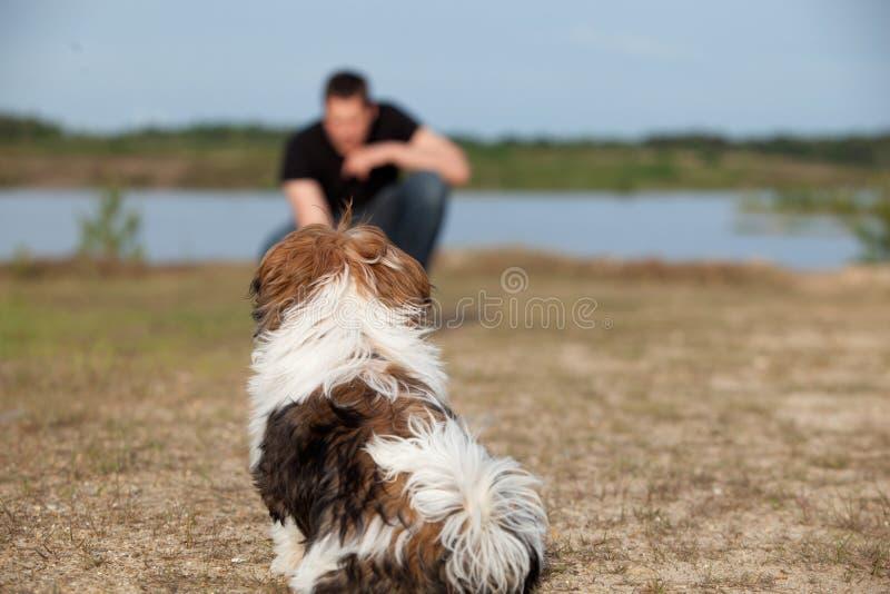 Het puppy krijgt gehoorzaamheid opleiding stock fotografie