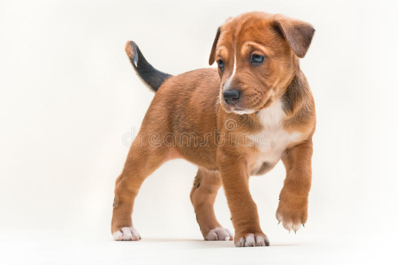 Het puppy nr 2 van de hond stock afbeeldingen