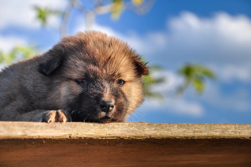 Het puppy slaapt leuk royalty-vrije stock afbeelding