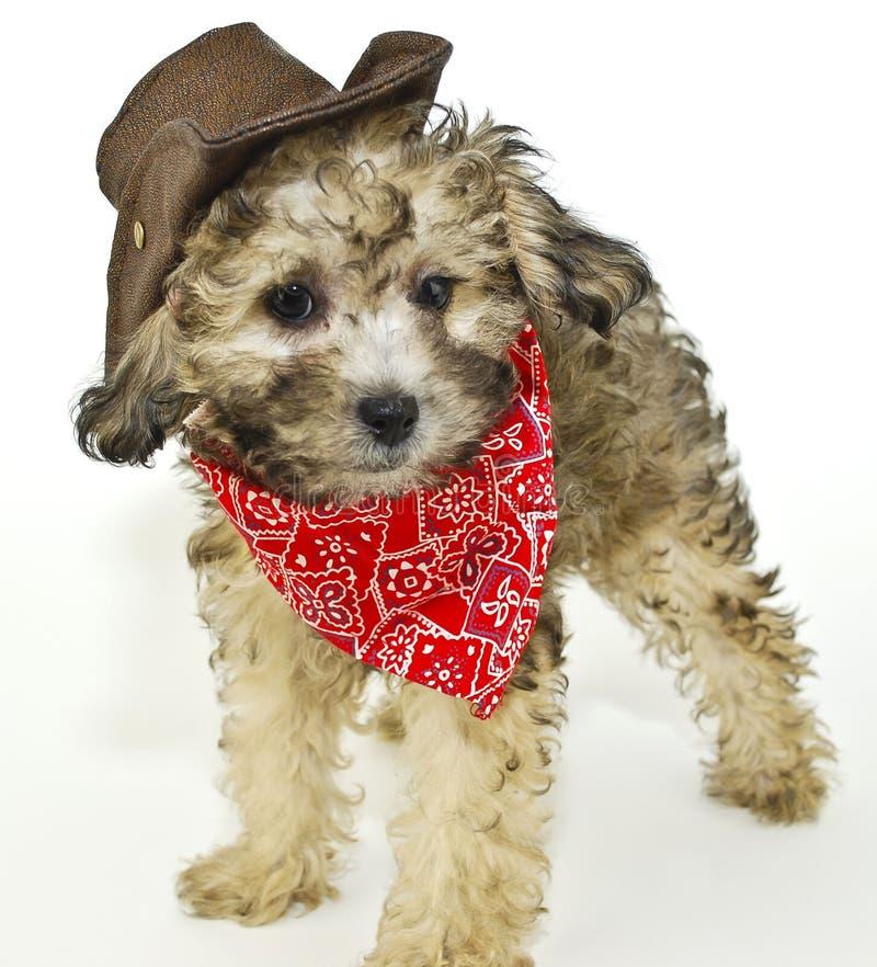 Het Puppy van Coyboy stock fotografie