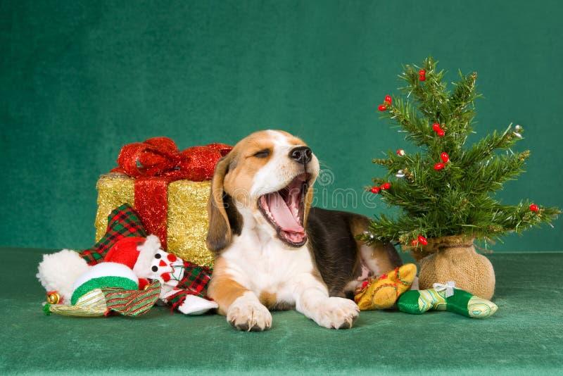 Het puppy van de brak met de giften van de Kerstmisboom royalty-vrije stock foto