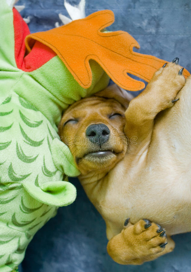 Het puppy van de slaap royalty-vrije stock afbeeldingen