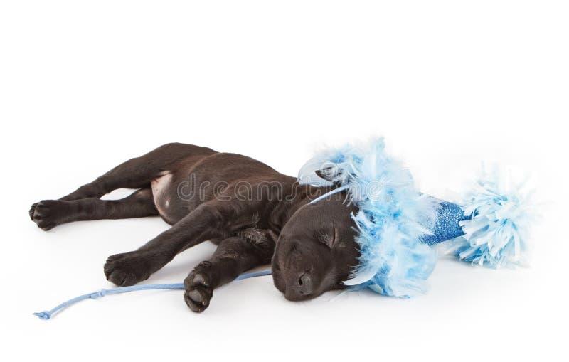 Het puppy van de slaap in een partijhoed stock afbeelding