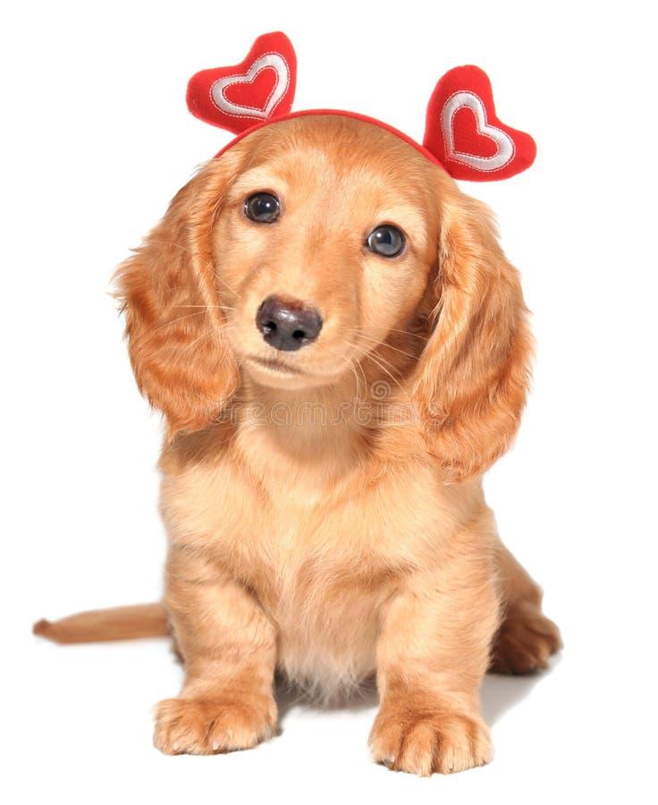 Het puppy van de valentijnskaart