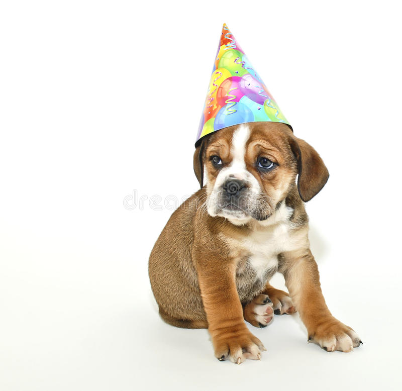 Het Puppy van de verjaardag royalty-vrije stock afbeelding