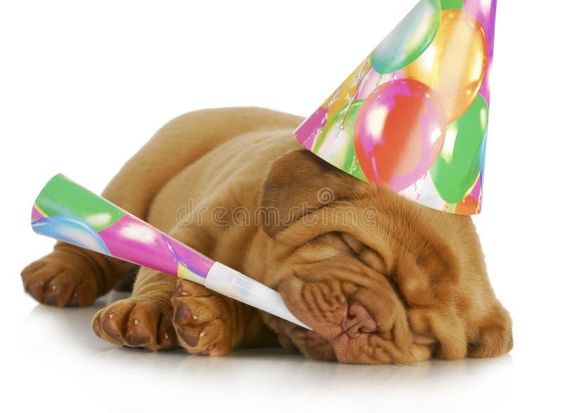 Het puppy van de verjaardag royalty-vrije stock foto's