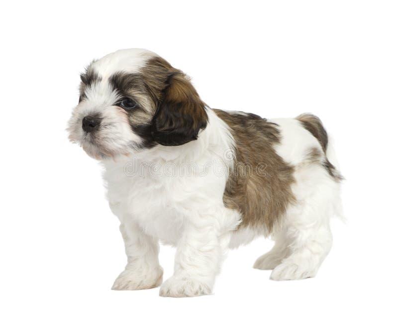 Het puppy van het mengen-ras royalty-vrije stock foto