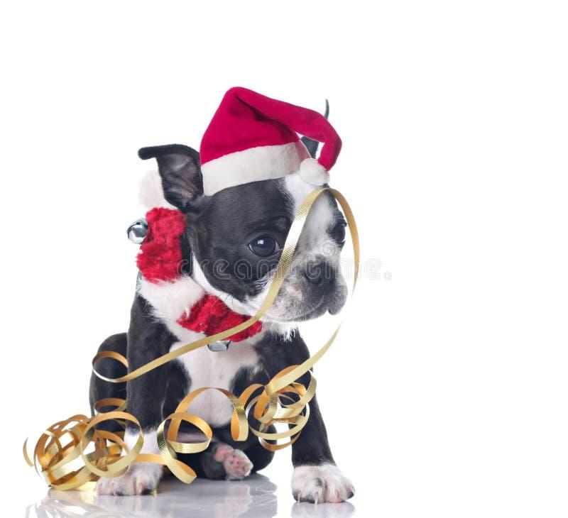 Het puppy van Kerstmis stock fotografie