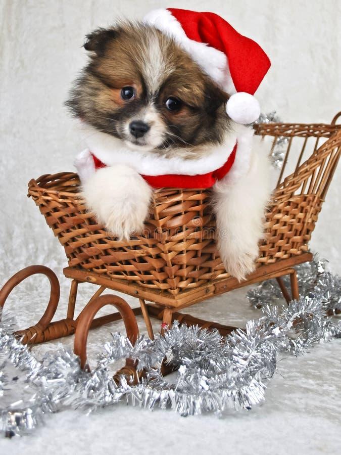 Het Puppy van Kerstmis royalty-vrije stock afbeelding