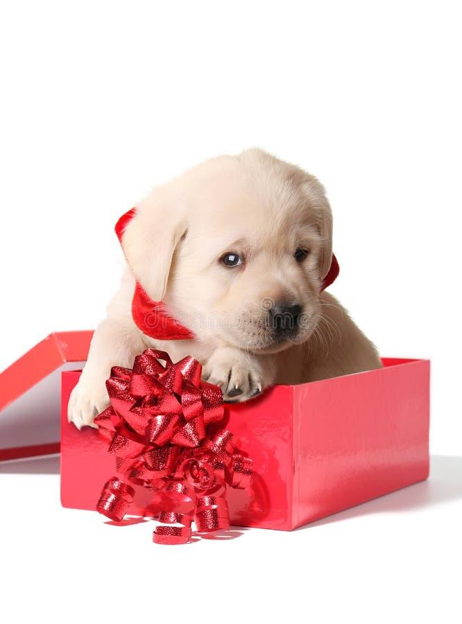 Het puppy van Kerstmis royalty-vrije stock afbeeldingen