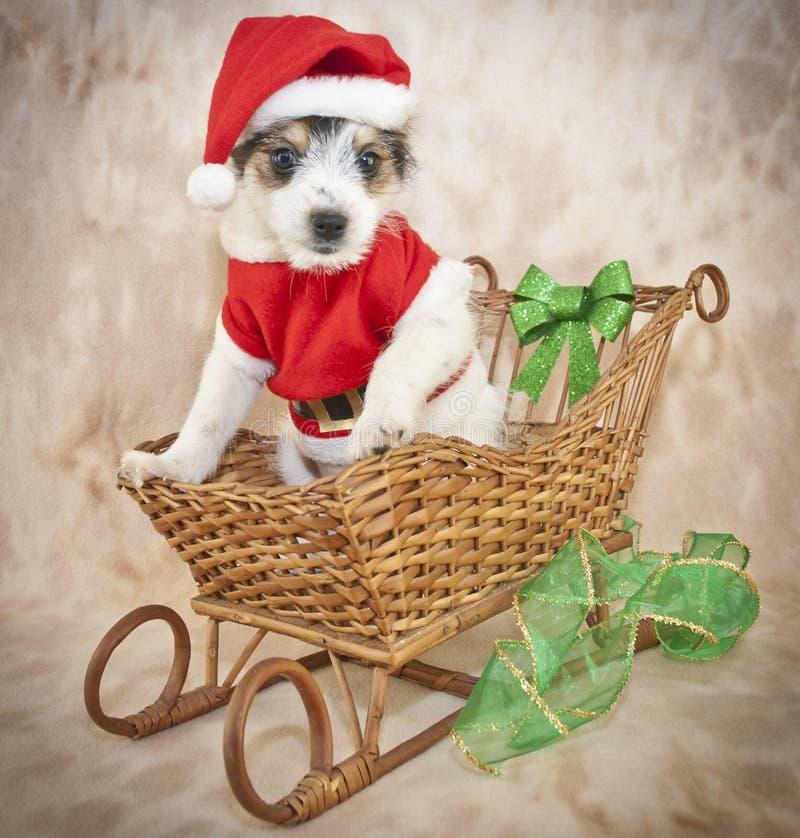 Het Puppy van Kerstmis royalty-vrije stock foto