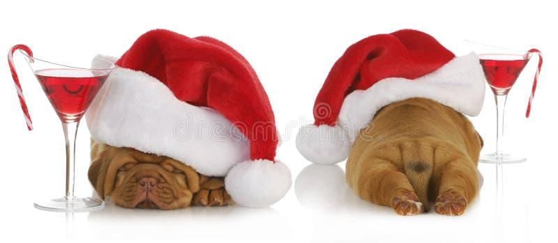 Het puppy van Kerstmis royalty-vrije stock foto's