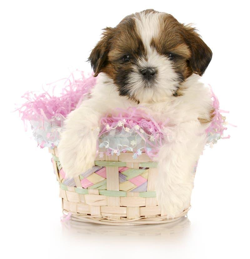 Het puppy van Pasen stock fotografie