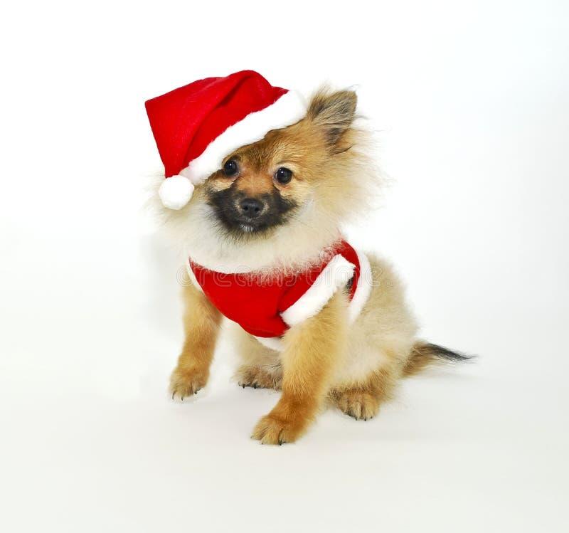 Het Puppy van Pom van de kerstman royalty-vrije stock foto's