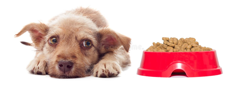 Het puppy wil geen droog voedsel eten royalty-vrije stock fotografie