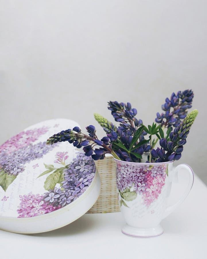 Het purpere en blauwe gebied bloeit lupine in mooie kop dichtbij hetzelfde als kopdoos stock afbeelding