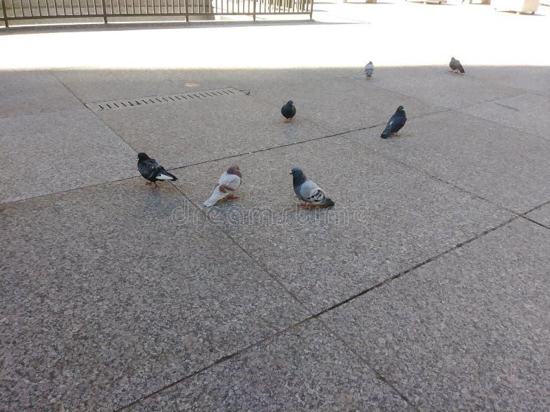 Het raadplegen vogels royalty-vrije stock foto
