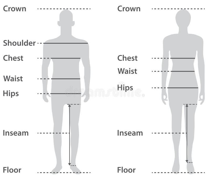 Het rangschikken op mannelijk en vrouwelijk lichaam royalty-vrije illustratie