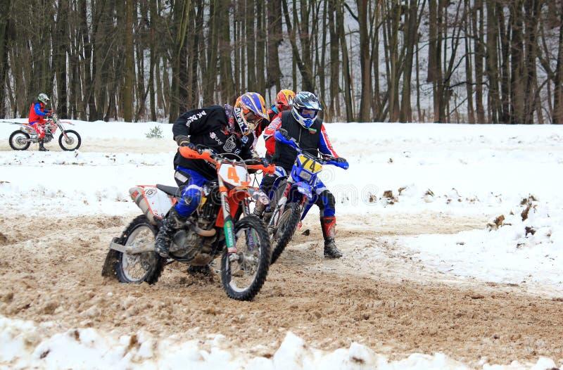 Het ras van Skijoring stock fotografie