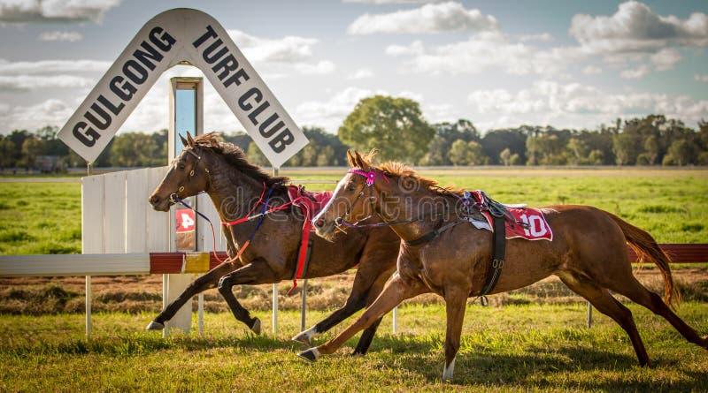 Het ras van twee raspaarden zonder jockeys in Gulgong NS royalty-vrije stock afbeeldingen
