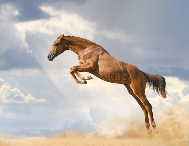 Het rasechte jonge paard springen stock foto