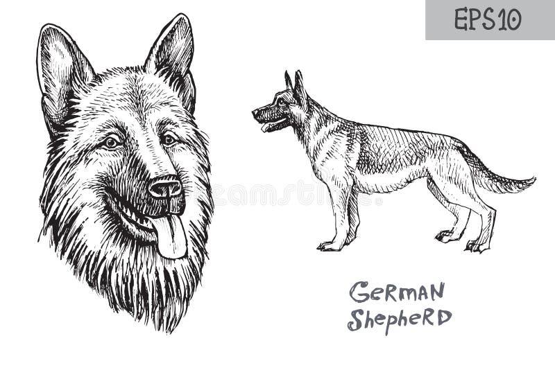 Het rassenillustratie van de Duitse herderhond Vectortekening van hond hoofd en zijaanzicht stock illustratie