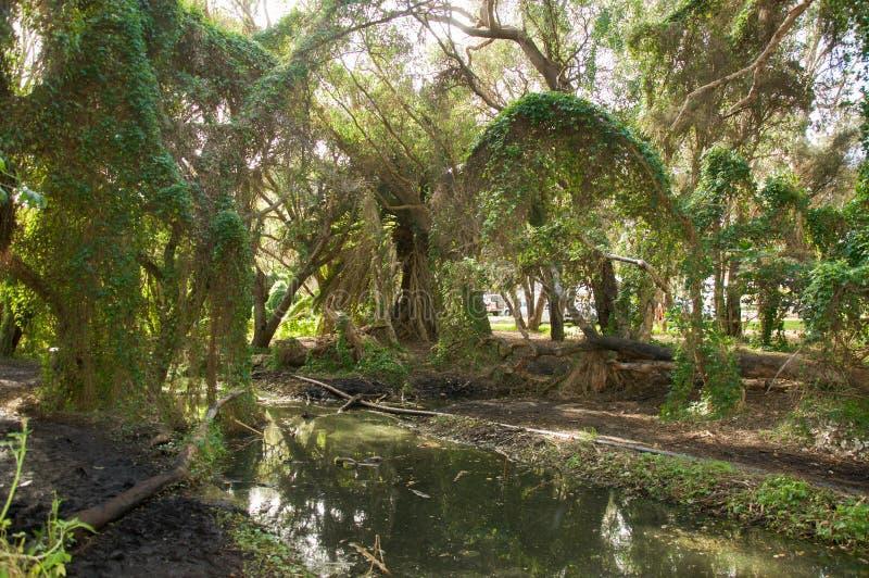 Het Ravijn van het Gwelupmoerasland stock foto's