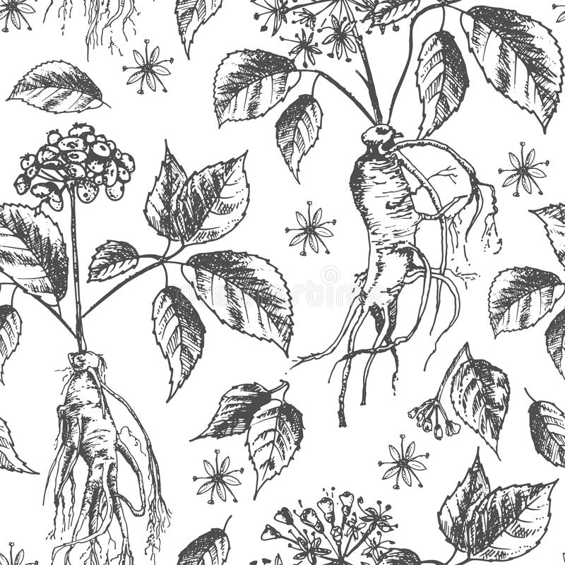 Het realistische Botanische naadloze die patroon van de inktschets met ginsengwortel, bloemen en bessen op wit wordt geïsoleerd b royalty-vrije illustratie