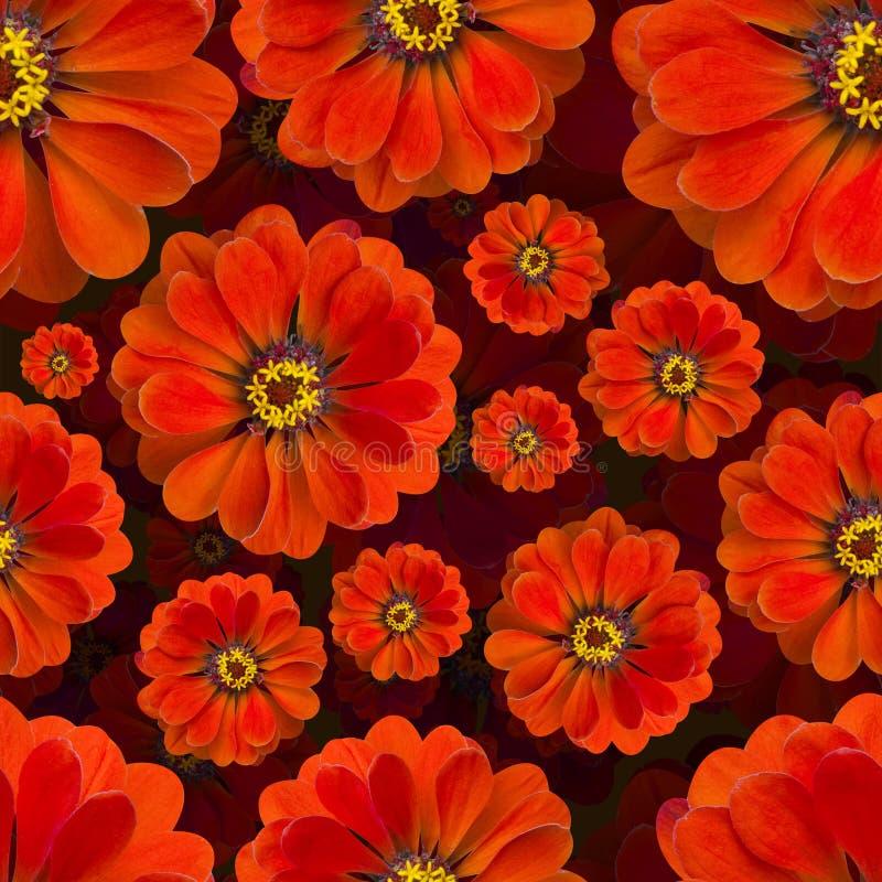 Het Red naadloze patroon van Zinnia Mooie bloemachtergrond stock afbeeldingen