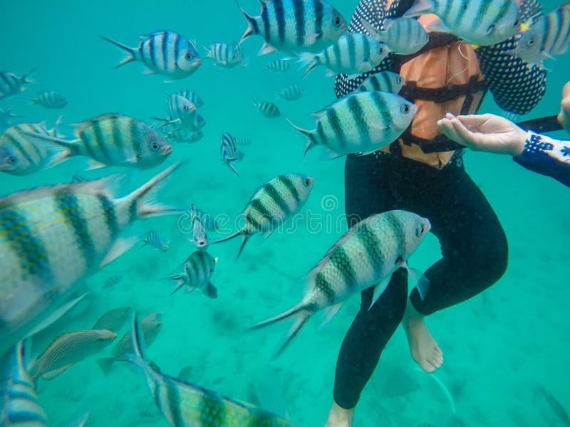 Het reddingsvest van de toeristenslijtage, geniet van snorkelend in het overzees, de toerist en de vissengroep in het overzees, d stock foto's