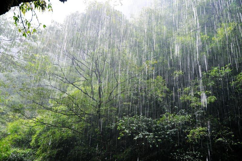 Het regenen in het bos royalty-vrije stock afbeelding