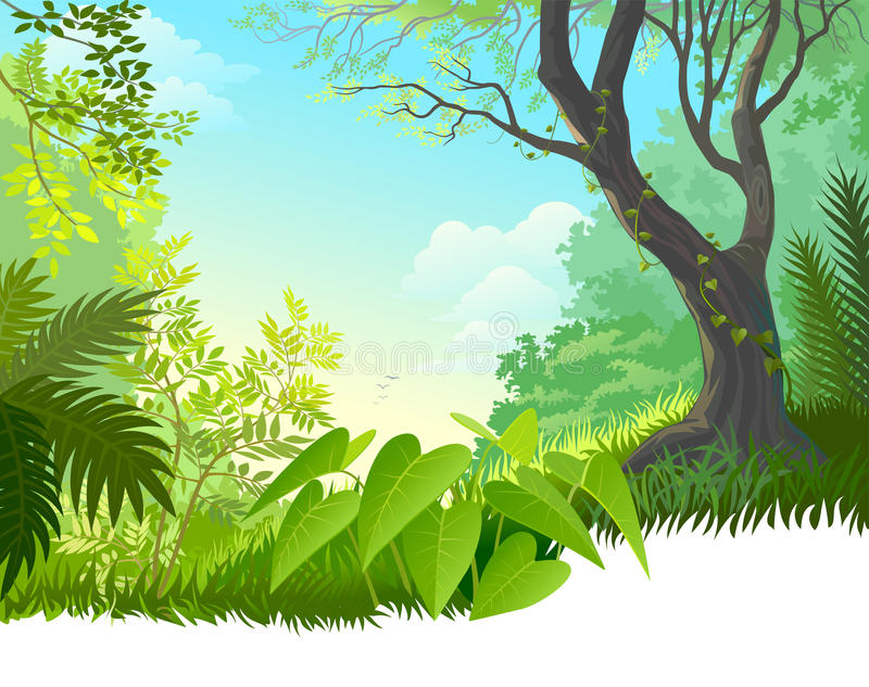 Het regenwoud van Amazonië vector illustratie
