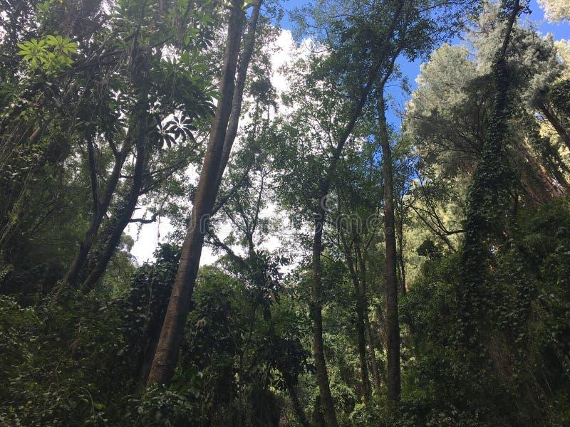 Het Regenwoud van Cartago stock foto's