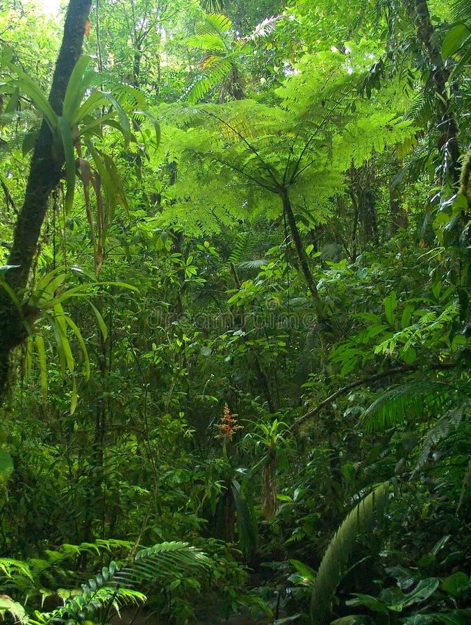 Het Regenwoud van Chachagua royalty-vrije stock fotografie