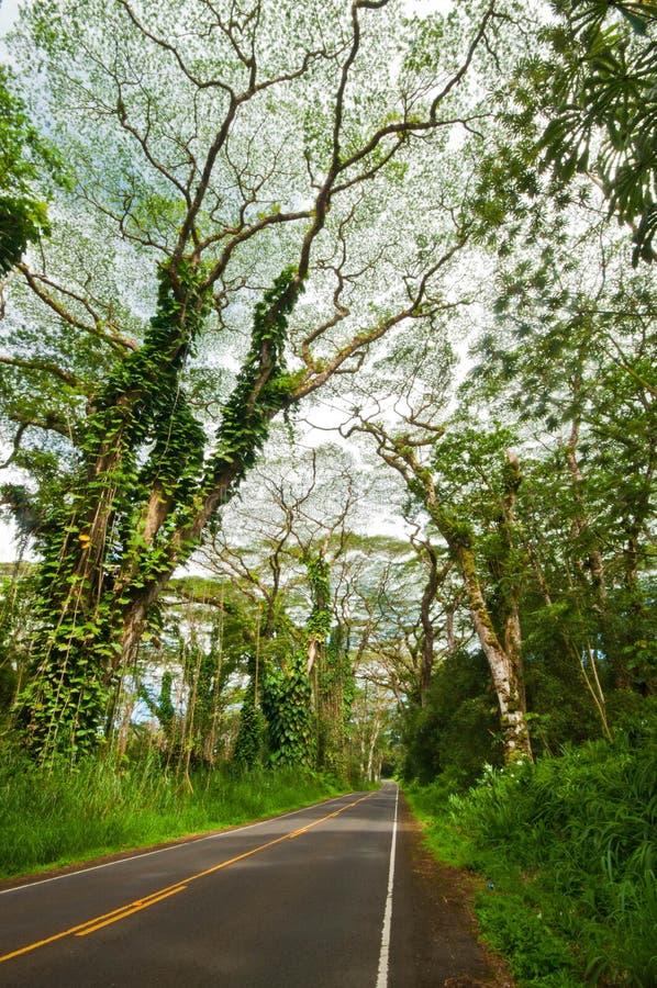 Het regenwoud van de wegtrog. Punadistrict. Hawaï. Groot Eiland stock foto's
