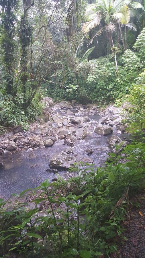 Het Regenwoud van het Puerto Ricaan stock foto's