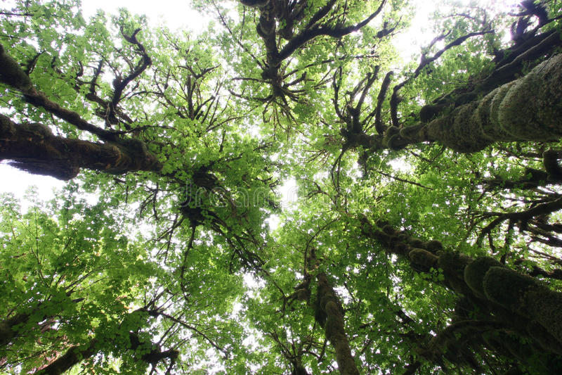 Het Regenwoud van Hoh, de Staat van Washington royalty-vrije stock fotografie