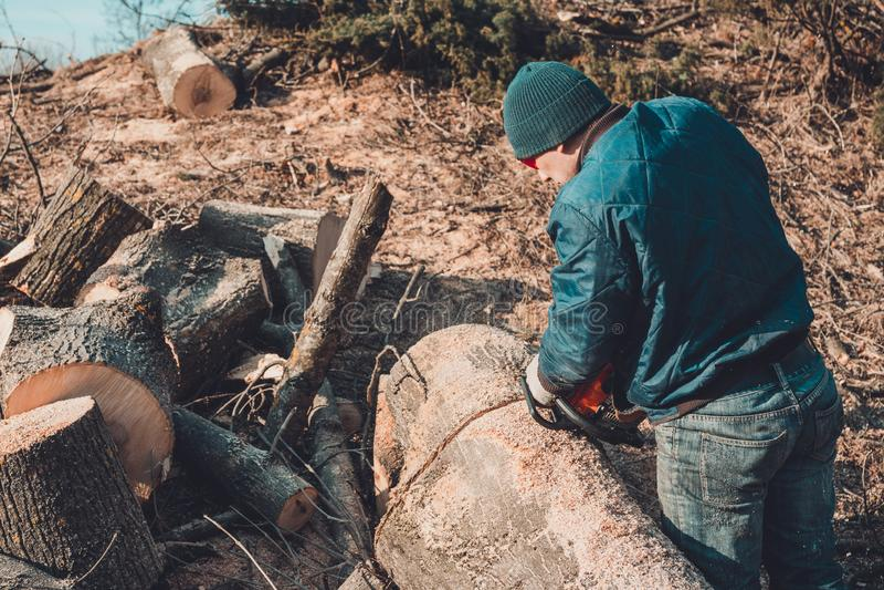 Het registreerapparaat sneed de boom van as van kettingzaag aan het hout, en treft voor de de winterperiode voorbereidingen stock afbeeldingen