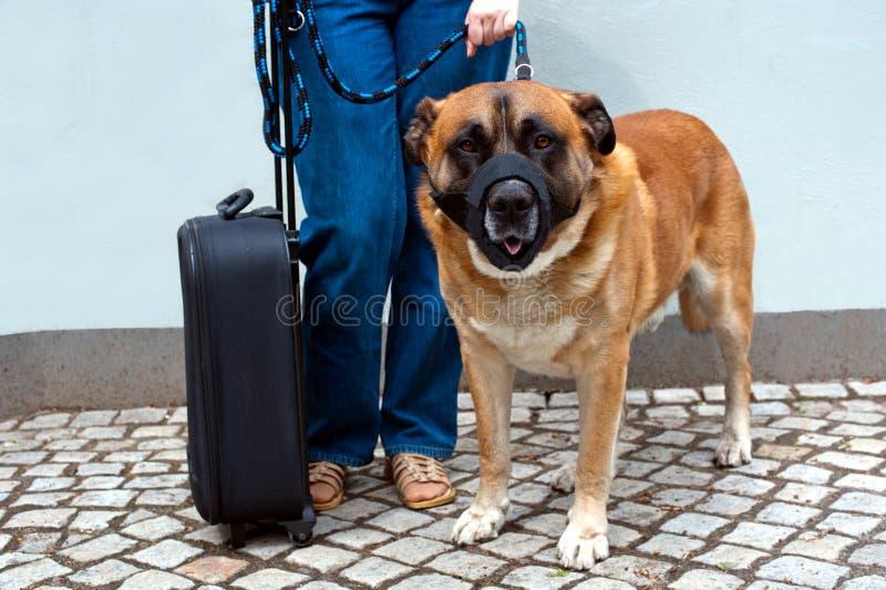Het reizen met hond stock afbeelding