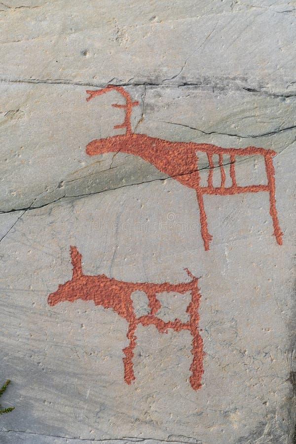 Het rendier en het kalf van rotsgravures royalty-vrije stock foto's