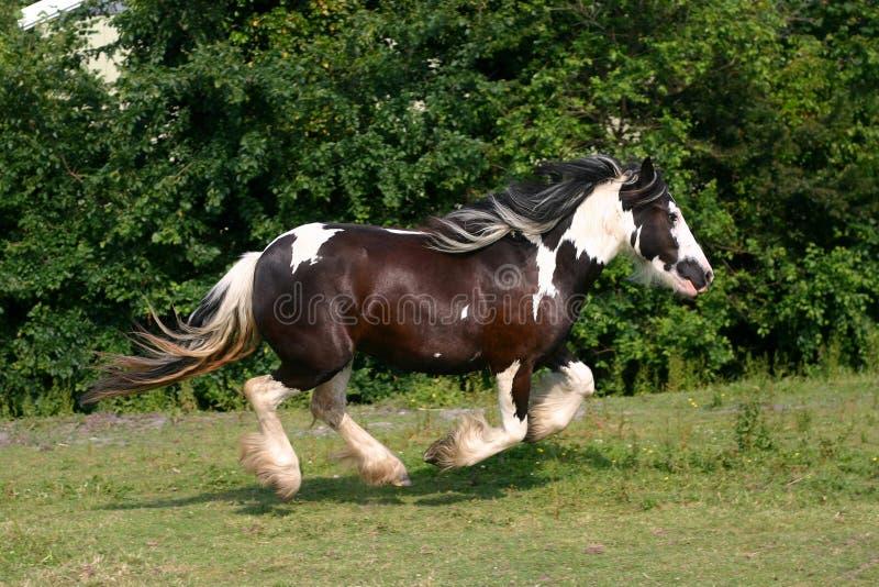 Het rennen paard royalty-vrije stock foto's