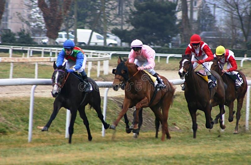 Het rennen van paarden royalty-vrije stock afbeeldingen