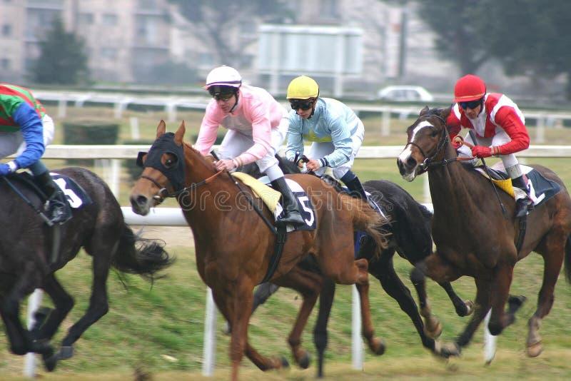 Het rennen van paarden stock foto's