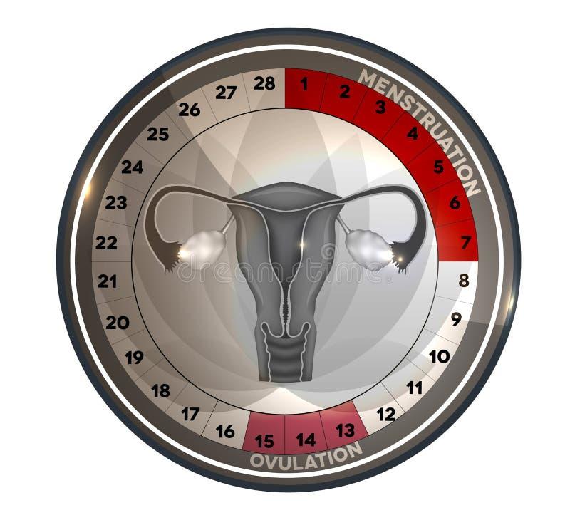Het reproductieve systeem van de menstruele cycluskalender royalty-vrije illustratie