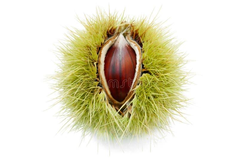 Het rijpe Fruit van de Kastanje royalty-vrije stock afbeelding