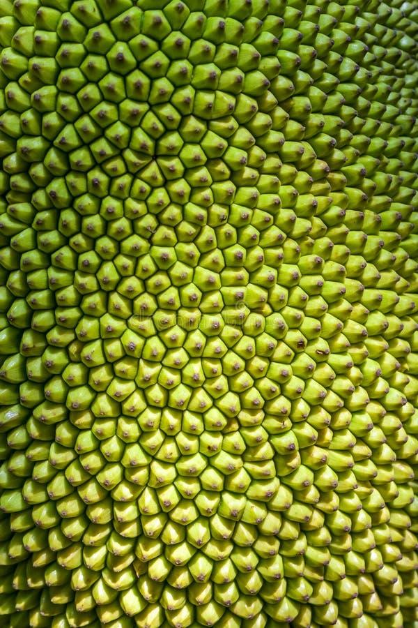 Het rijpen Jackfruit royalty-vrije stock fotografie