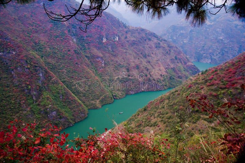 Het rode blad in de Drie Kloven bij Yangtze-rivier stock afbeeldingen
