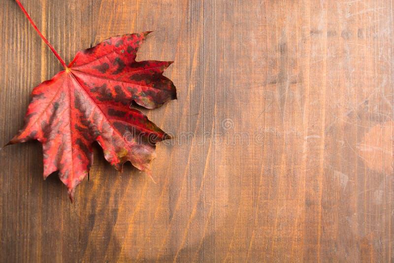 Het rode blad van de de herfstesdoorn over bruine houten achtergrond royalty-vrije stock foto