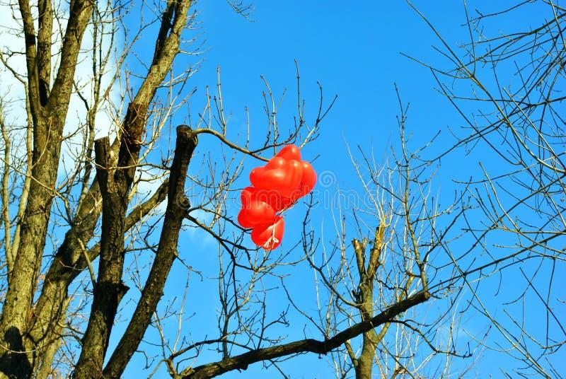 Het rode hart vormde ballons die op boomtak hangen zonder bladeren heldere blauwe hemel royalty-vrije stock foto's