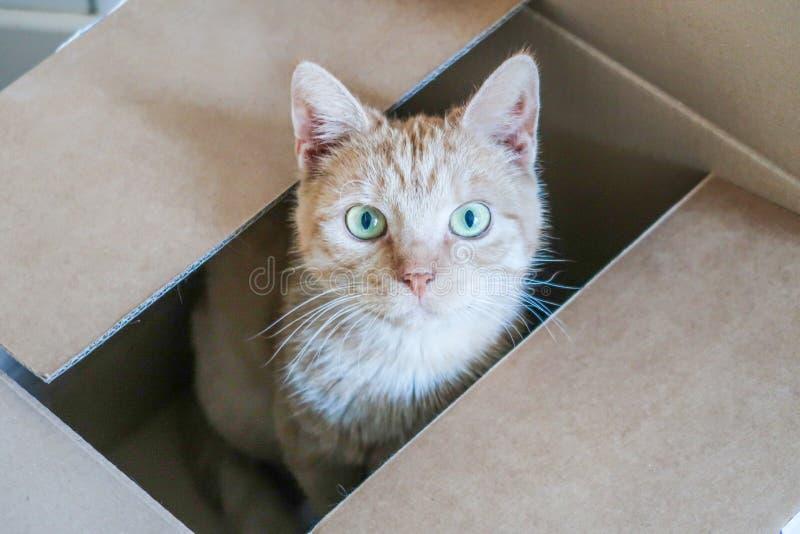 Het rode kat verbergen in een kartondoos die omhoog eruit zien royalty-vrije stock afbeelding